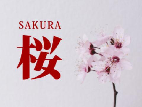 【まとめ:桜商材】季節商材のようで年間定番!売れる期間が長いのでガッツリ仕入れましょう!