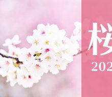 【まとめ:桜2021】締切間近!ボリューム感が大事!【季節商品で定番商品】