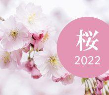 【まとめ:桜2022】締切終了品もあり!売り場に季節感を出していく!